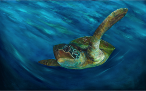 sea turtle website